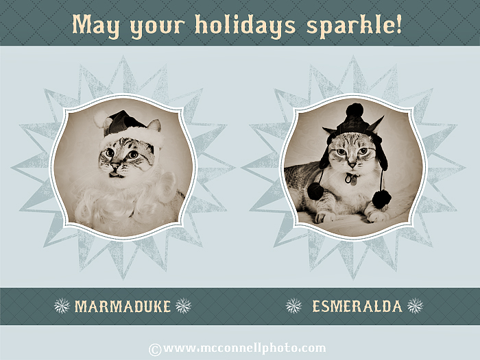 our photography studio's holiday card featuring the studio mascots cats in santa hats