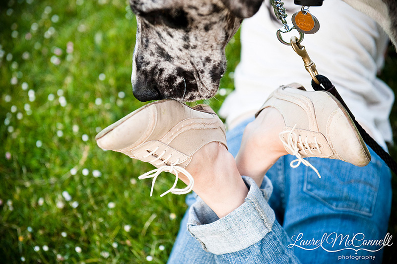 dog and oxfords