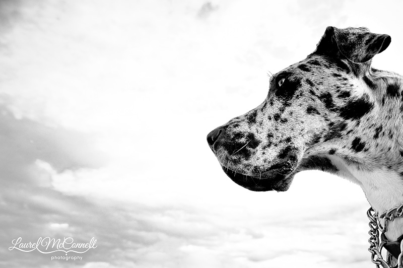 spotted dog and clouds