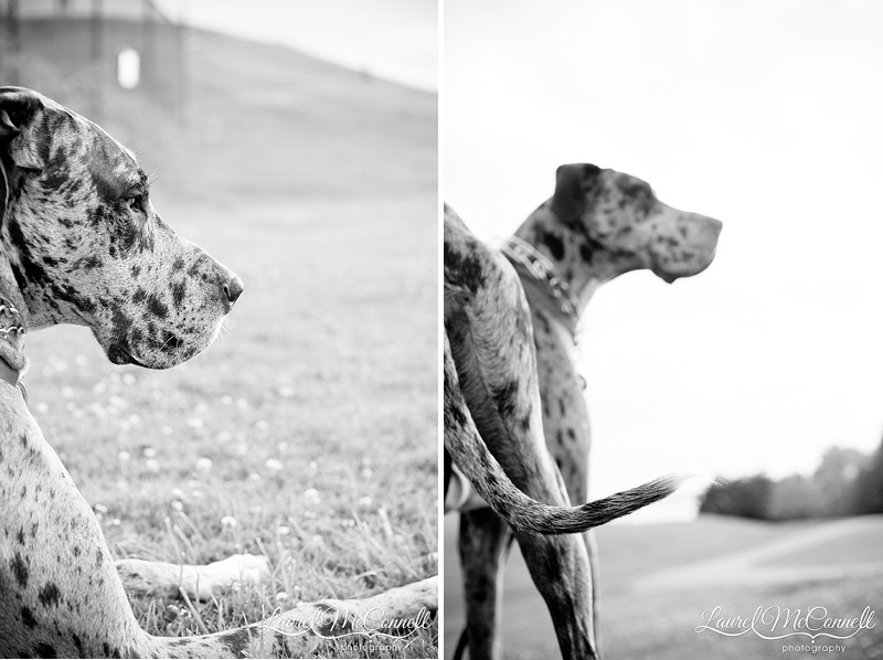 fine art photography of dog profile and tail black and white in seattle park