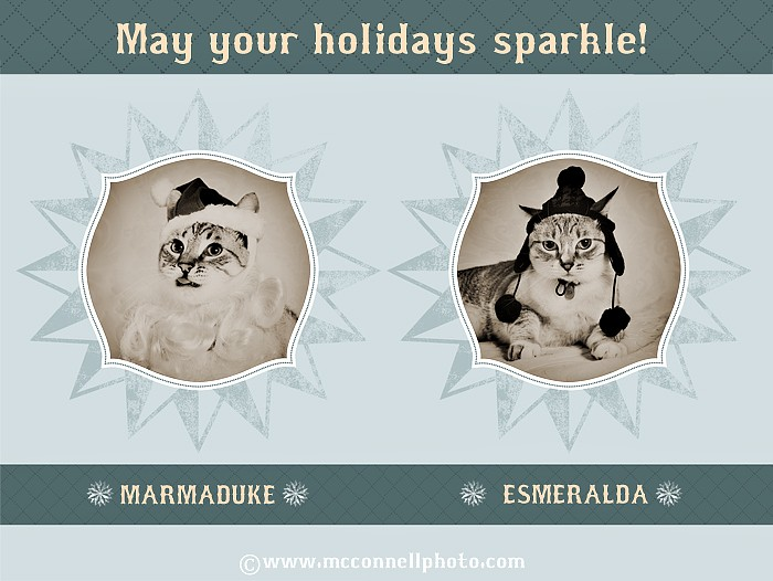 Happy Holidays From Our Studio Mascots!